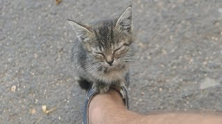 The kitten lives on the street and sleeps on my sneakers