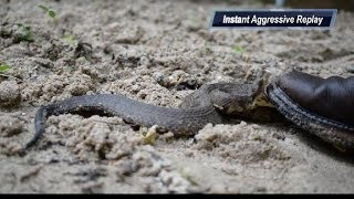 Video Chased By A Nest of Cottonmouths MP3, 3GP, MP4, WEBM, AVI, FLV Agustus 2019