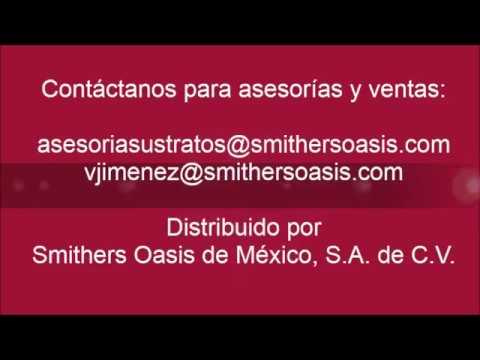 siembra de sandia - Anímate a cultivar Sandías en sistemas hidropónicos con los sustratos distribuidos por Smithers Oasis de México! Contáctanos para asesorías y ventas: asesor...
