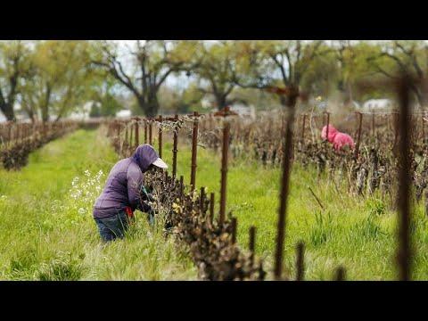 COVID-19: Σε απόγνωση οι αγρότες στην Ευρώπη