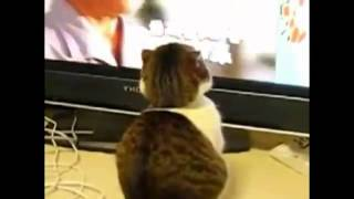 Shocked Cats Compilation.