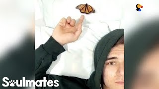 Guy Becomes Best Friends With A Butterfly | The Dodo Soulmates by The Dodo