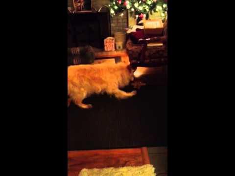 Sammy Playing with Chloe's Toy (видео)