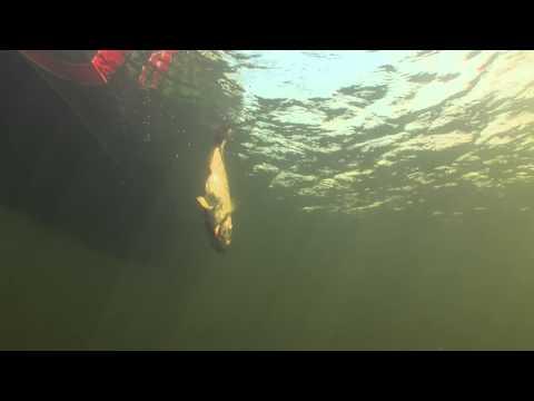 Pre-Spawn Jerkbait System - Hook n' Look Splash #29Pre-Spawn Jerkbait System - Hook n' Look Splash #29<media:title />