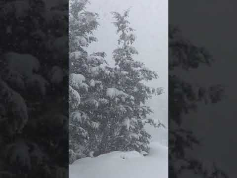 Denver Blizzard Whiteout Snow Bomb Cyclone Winter Storm 2019