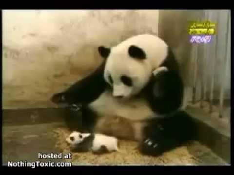 Ухахах смешные приколы про животных