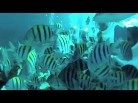 Sea Trek in Grand Cayman