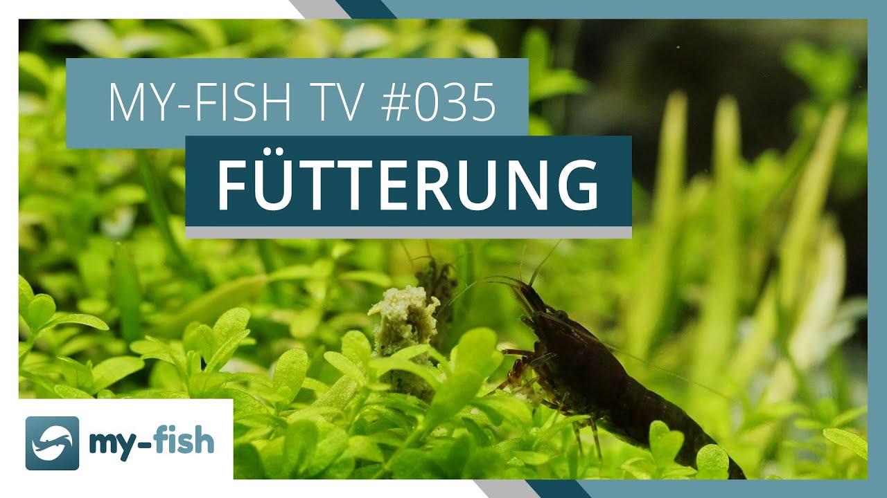 my-fish TV - Deine Nr. 1 Anlaufstelle für alle Themen rund um die Aquaristik 29