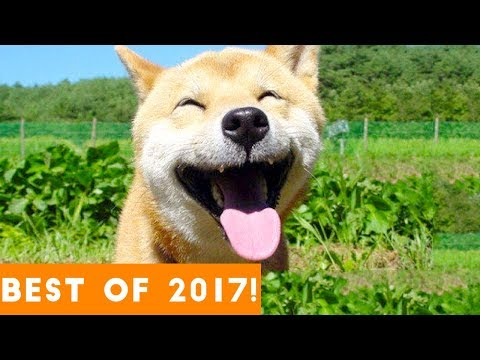 BEST ANIMALS OF 2017 | Funny Pet Videos