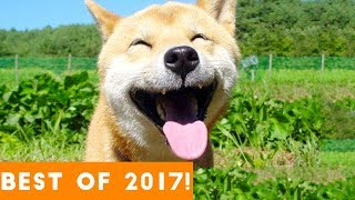 Video BEST ANIMALS OF 2017   Funny Pet Videos MP3, 3GP, MP4, WEBM, AVI, FLV April 2018