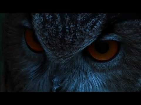 owl - The Eagle Owl is the most powerful nocturnal bird of prey on the Iberian Peninsula. Its great scope and versatility allows it to hunt on innumerable species ...