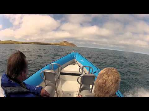 The Big Duck Boat Tours - Dolphin Watching