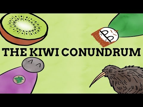 Why Is Kiwi The Name For A Fruit, Bird, And People? (Ft. Soliloquy)
