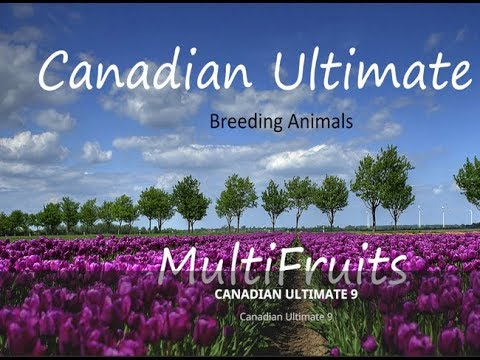 Canadian Ultimate v9.2