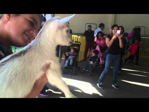 這隻被偷走的小羊流浪幾天後終於獲救,當牠再次看見媽媽時…那一幕直接噴淚!
