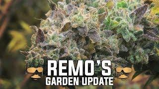 Remo's 4K Garden Update (Week 9) by Urban Grower