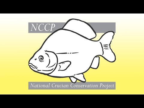 National Crucian Carp Project explains its work on new video