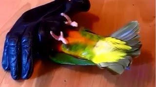 This dude is quite the character. I didnt know birds like to play dead and hide-and-seek so much! I started videoing after the third...