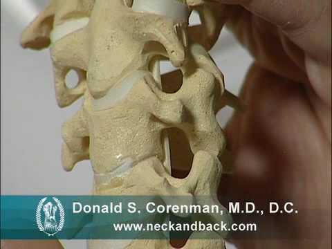 Anatomy and Motion of the Cervical Spine | Neck Conditions | Vail Orthopedic Spine Surgeon