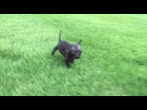 Duke love to run in the grass on potty breaks
