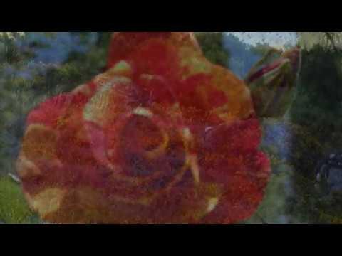 Poemas cortos - Un lugar para la poesía - Rosa roja y Quisiera escribir