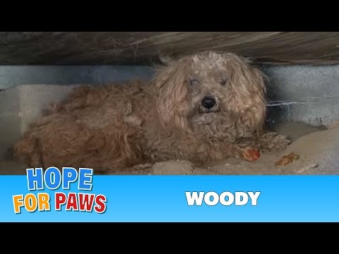 When the dog's owner died, he was left behind.  Watch what happens next!  Please share