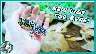 Natural Leopard Gecko Tank by Solid Gold Aquatics