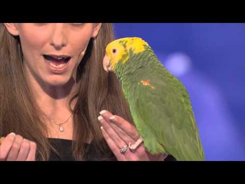 Konuşan Kuşun İnanılmaz Performansı - Yetek Sizsiniz Amerika