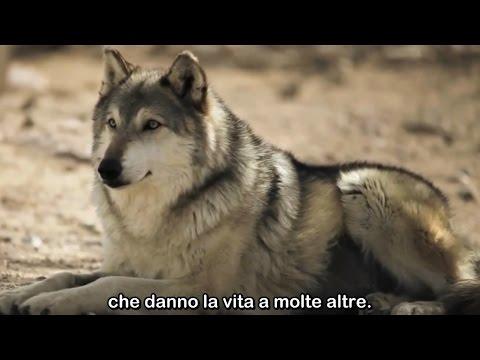 e il lupo mutò il corso dei fiumi