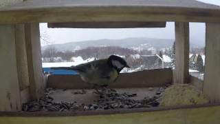 Tak som dal kameru do krmítka na balkóne v pozadí je Bojnický zámok :)