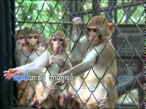 Myanmar Children songs ( သူတို႔ဘဝနဲ႔ သူတို႔ေတြ ):
