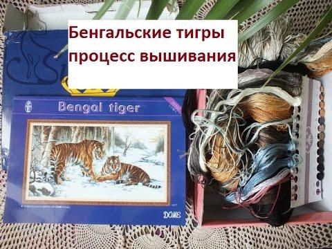 DOME70702 Бенгальские тигры обзор и первые крестики