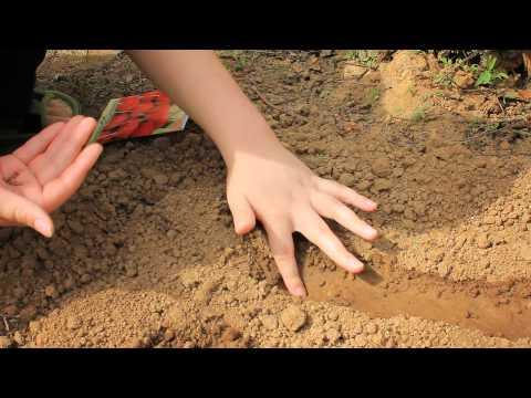 Все что нужно знать при выращивании редиса
