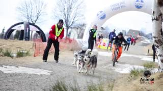 Malamute Day - 2017 - Highlights
