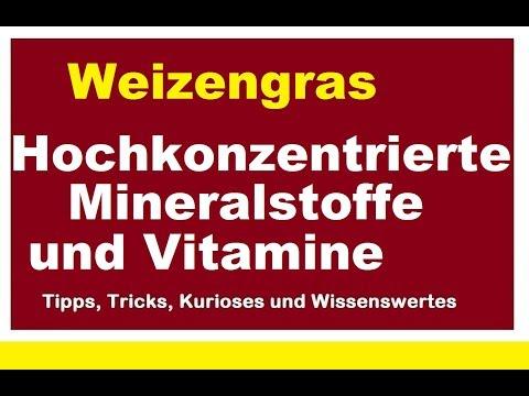 Weizengras Weizengraspulver hochkonzentrierte Mineralstoffe Vitamine Pulver um Abwehrkräfte stärken