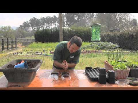 Cómo sembrar hierbas aromáticas//Balcón comestible//LlevamealhuertoTv