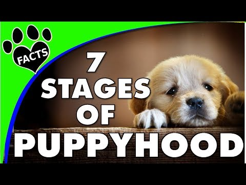 Dog Years: The 7 Stages Of Puppy Growth And Development - Animal Facts