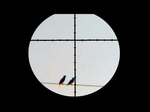 125 Yard Starling Shot with Air Rifle - Laser Rangefinder Demonstration