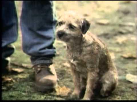 Banned Commercials - Superbowl XXXVIII - Bud Light - Good dog