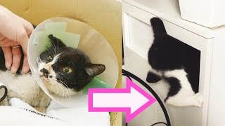 Rescuing the world's most annoying cat