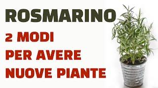 Video Rosmarino  ecco 2 modi per ottenere nuove piante MP3, 3GP, MP4, WEBM, AVI, FLV September 2018