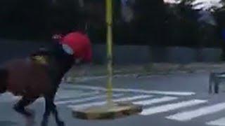 Fantino al galoppo allo Zen, lui e il cavallo si schiantano contro un palo
