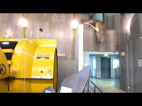 Go To: Museu da Baleia