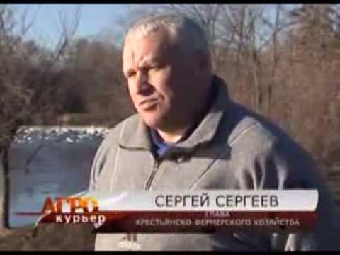 Фермер Сергей Сергеев занялся разведением итальянских гусей