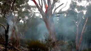 Wirrabara Australia  City pictures : Tree Fire Wirrabara May 2012.wmv