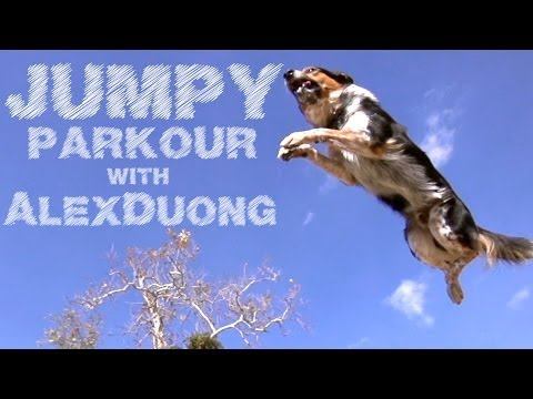 Parkour pro vs Jumpy the parkour dog, in slow motion