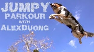 The Parkour Dog - Alex & Jumpy