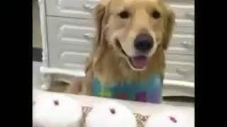 Perro escoge el plato equivocadovideos sad videos muy sad