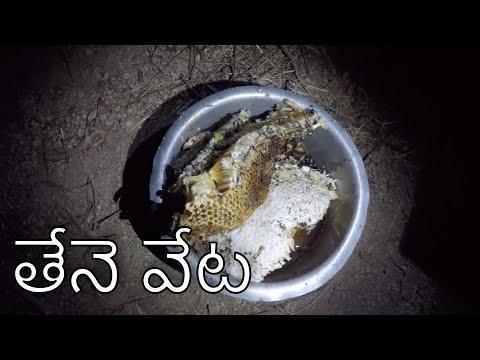 honey bee hunting | telugu | thene veta | my village show tv