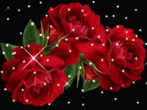 HAPPY ROSE DAY VIDEO